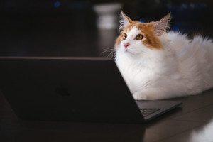 cat126IMGL6511_TP_V4[1]